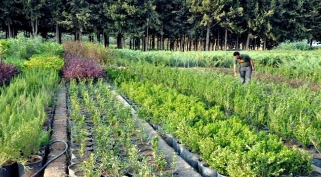 Şanlıurfa'nın süs bitkileri Akçakale'de yetişiyor